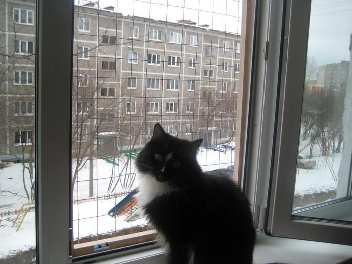 Кошачьи приметы и суеверия: о чем пророчат пол, окрас и поведение домашних любимцев