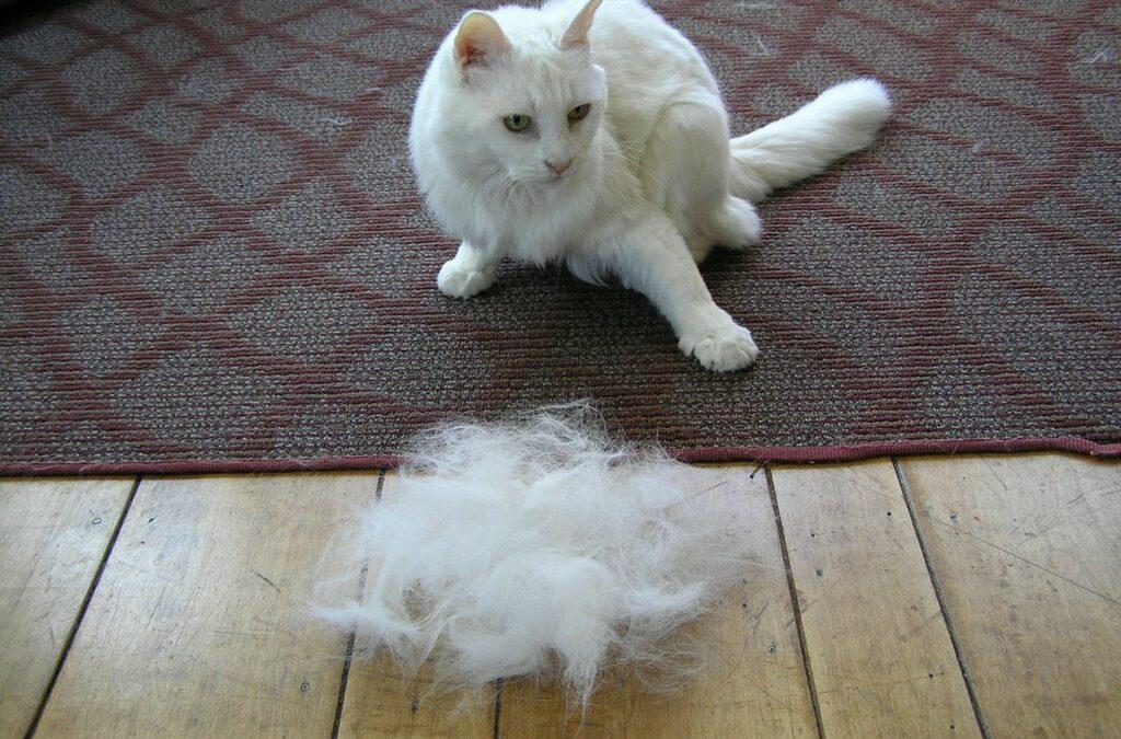 Кошка сильно линяет. советы!