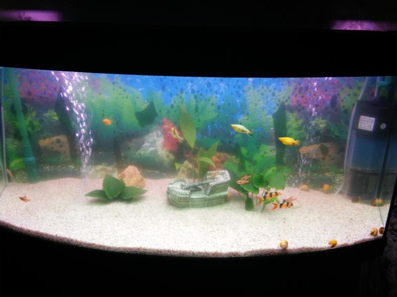 Почему мутнеет вода в аквариуме с рыбками и как с этим бороться, как избавиться от запаха болота, каковы причины и как их устранить?