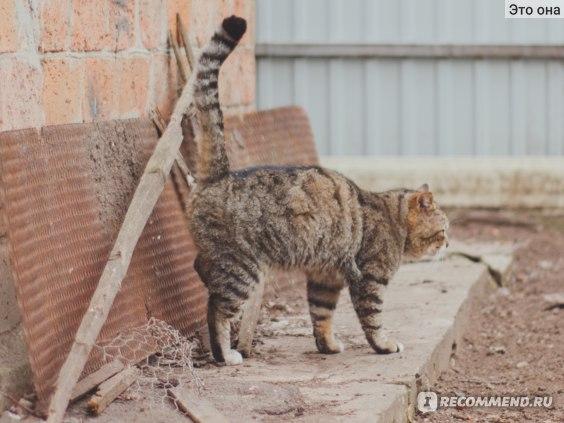 Как отучить кастрированного кота метить территорию в квартире народными средствами