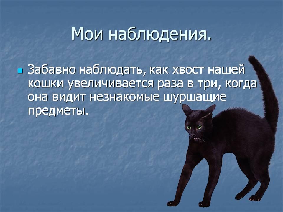 Ампутация хвоста у кошек