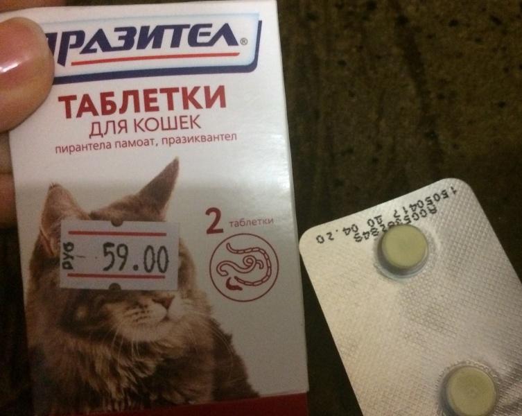 ????рейтинг лучших лекарств от паразитов для кошек на 2021 год