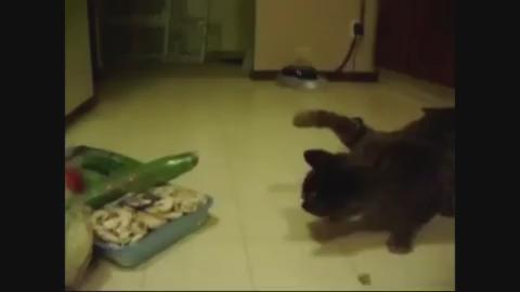 6 причин почему коты боятся огурцов и воды: почему, зачем пугать кота огурцами