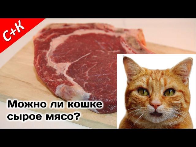Чем и как кормить кошку правильно: что можно давать и сколько