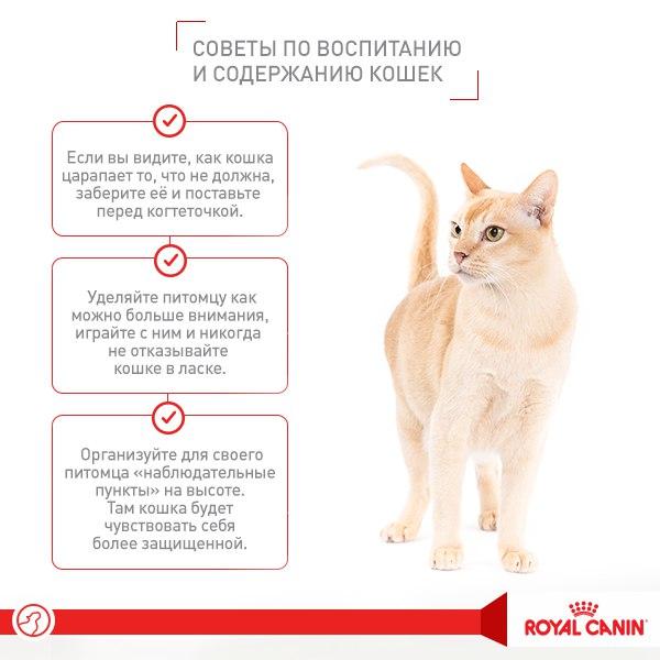Почему кошка не ест сухой корм: что делать хозяину, как понять причину, правила подбора нового корма