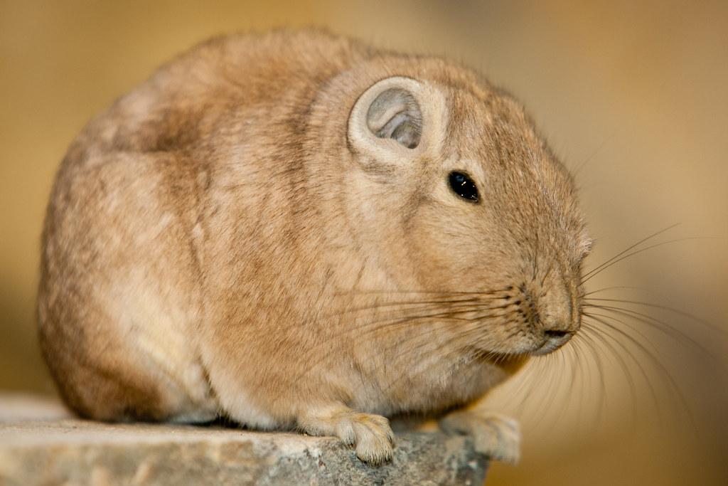 Животные пустыни: большое разнообразие, описание представителей