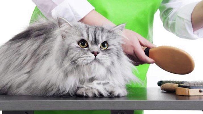 Можно ли стричь кошек налысо британской породы