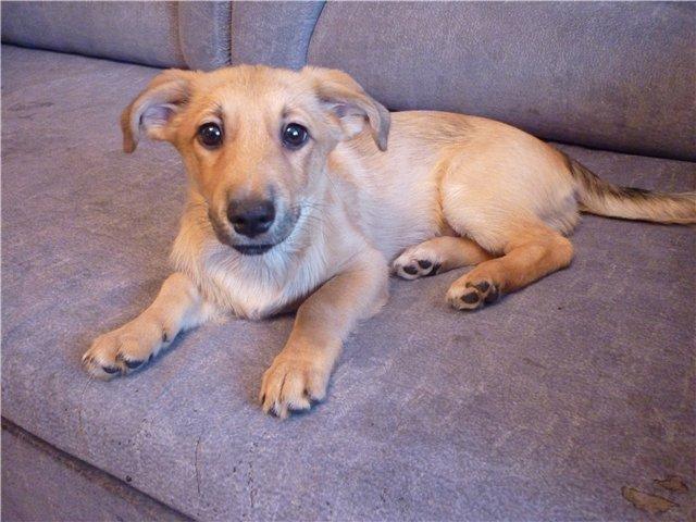 Как узнать породистая собака или нет? определяем породу своей собаки: методы и способы.