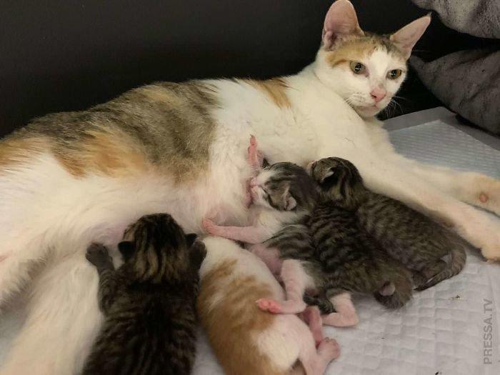 Сколько времени обычно длятся роды у кошки?