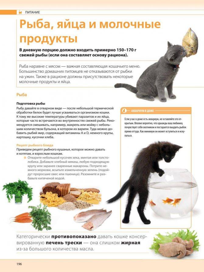 Можно ли кошкам и котам сырое мясо: эксперимент ученых
