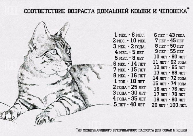 Возраст котёнка: разгадываем тайну