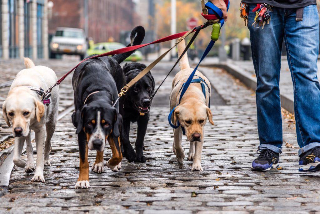 Сколько раз в день нужно гулять с собакой?