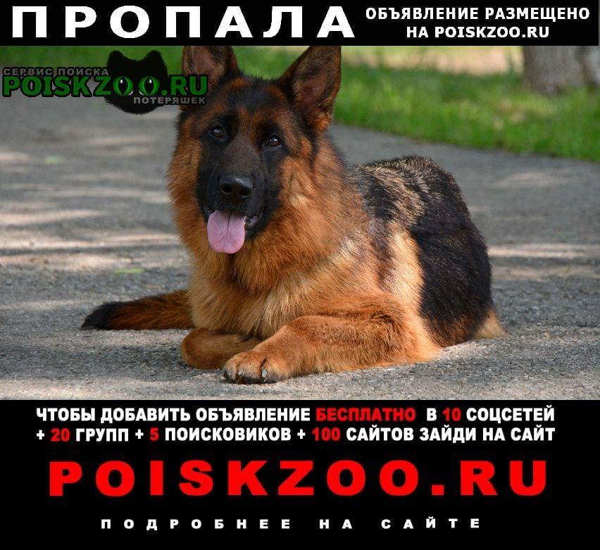 Собаки владимира путина — фото и породы питомцев президента