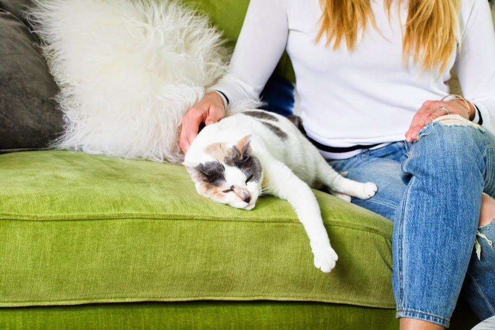 Как у знать что кот расстроен
