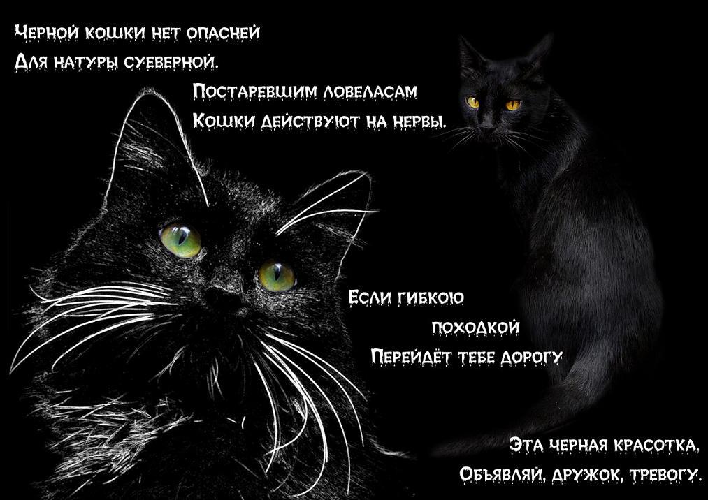 К чему появляется котенок дома: приметы про котов и кошек