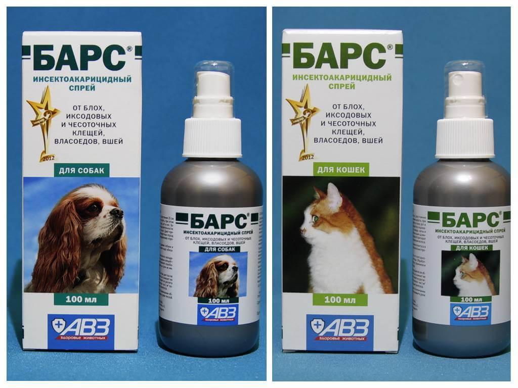 Блохи у кошек: симптомы, профилактика, лечение