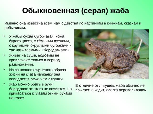 Чем питаются лягушки: хищные они или травоядные?