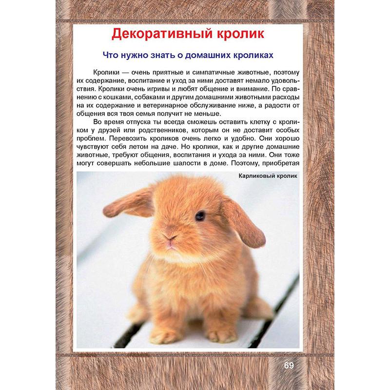 Домашний кролик: сколько живут, как продлить срок жизни?