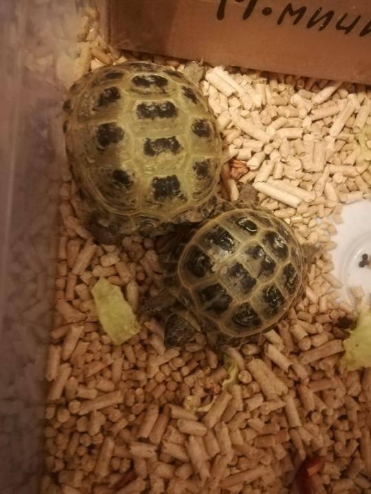 Сухие корма для водных черепах - все о черепахах и для черепах. полноценная еда для черепах в домашних условиях: рептомин и другие корма