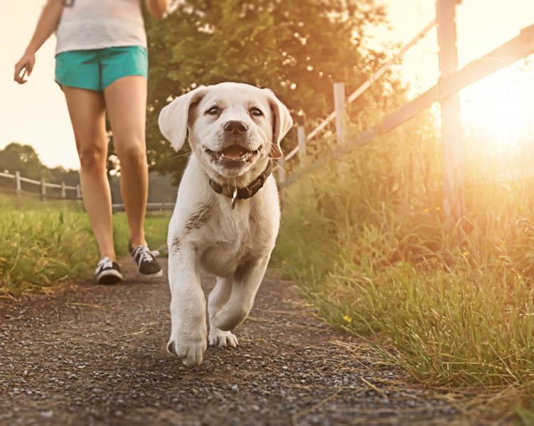 Прогулка с собакой: когда и сколько раз в день можно гулять с щенком? как правильно выгуливать собак? нужно ли мыть лапы после прогулки?