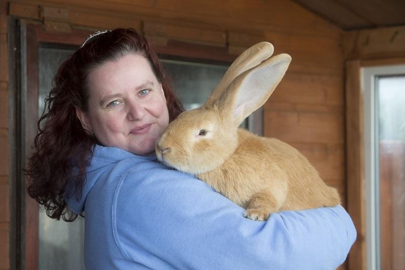 ᐉ лисий карликовый кролик: описание породы - zooon.ru
