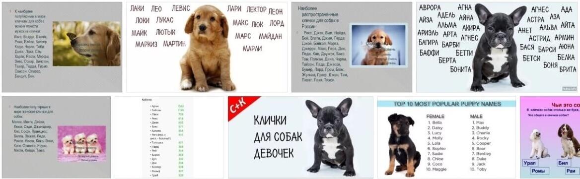 Самые популярные клички для собак в алфавитном порядке с рекомендациями