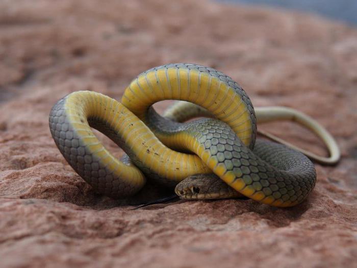 Как избавиться от змей на участке: самые эффективные способы