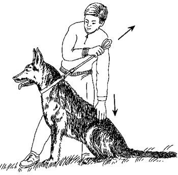Как научить собаку команде ждать (жди), научить собаку выдержке - dogtricks.ru