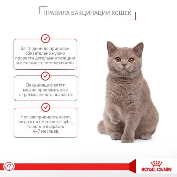 Можно ли кормить кошек яйцами?