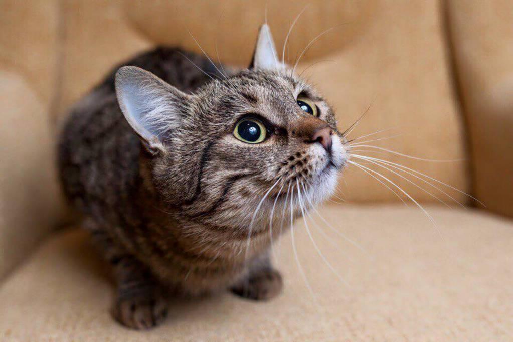 Кто лучше ловит мышей: кот или кошка?