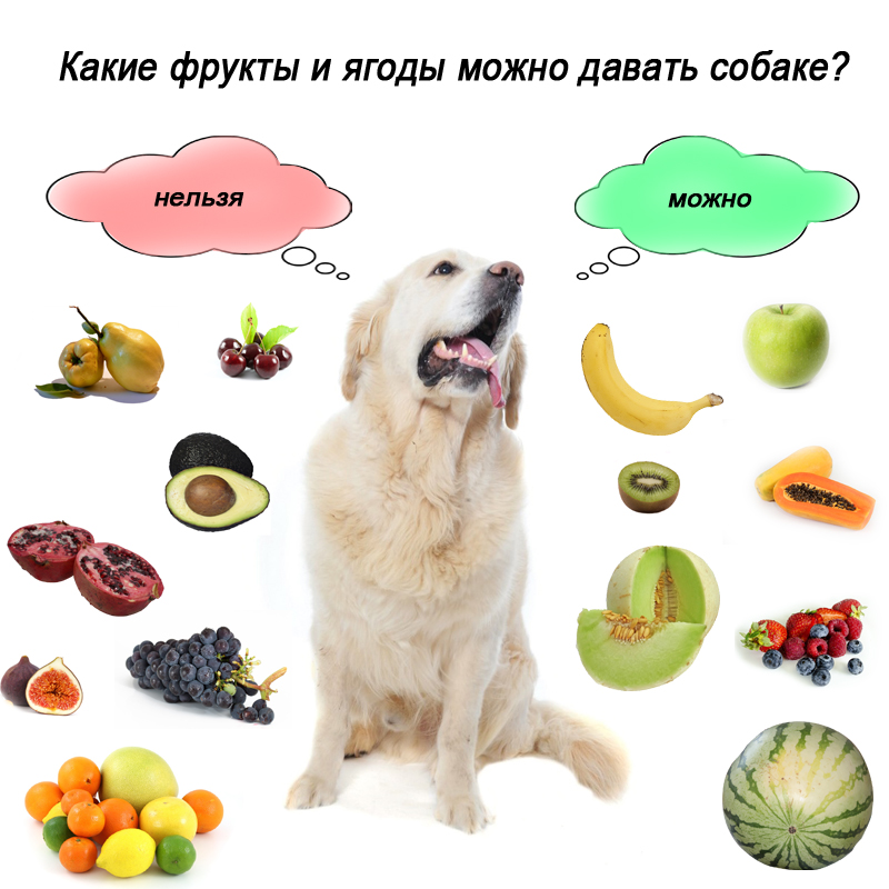 Можно ли давать собаке виноград?