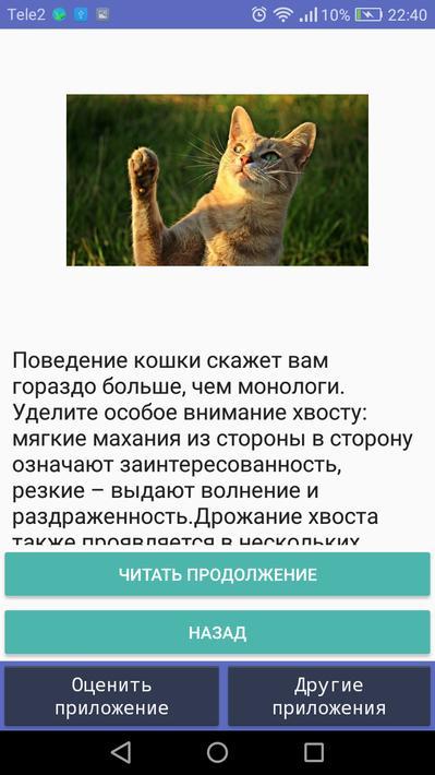 Кошачий язык — переводчик мимики, жестов, поз, словарь звуков. перевод с человеческого на кошачий язык | жл