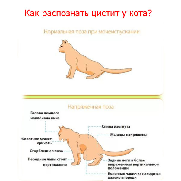 Язва желудка у собак и кошек