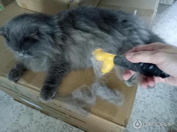 Кошка сильно линяет, что делать, кошка постоянно линяет
