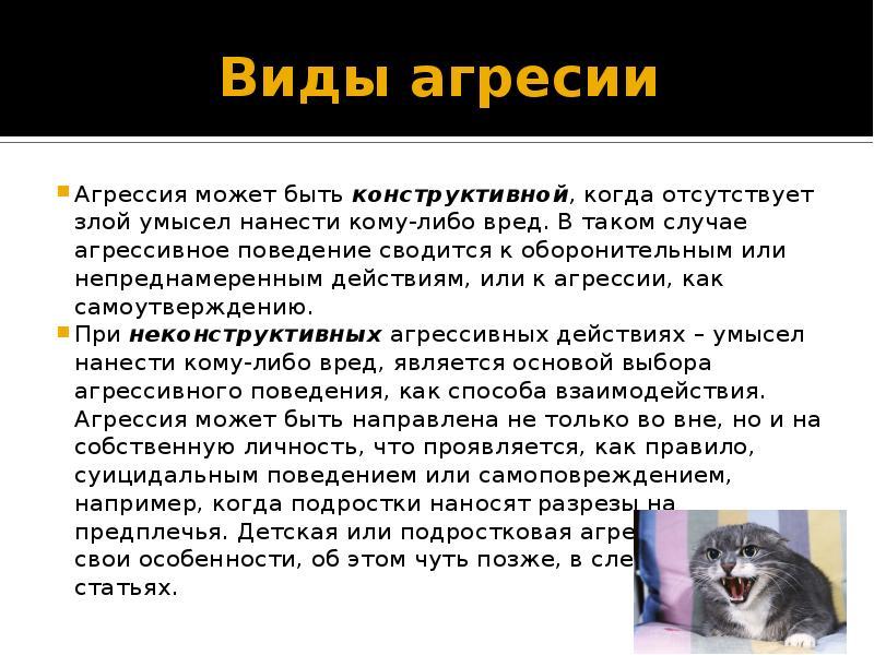 Агрессия у кошек. что делать? лучшие способы коррекции поведения кошки (после стерилизации или родов)