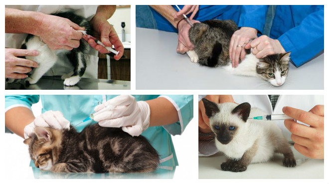 Блохи у котят 1-2 месяца - как вывести блох у котенка (капли от блох)   нвп «астрафарм»