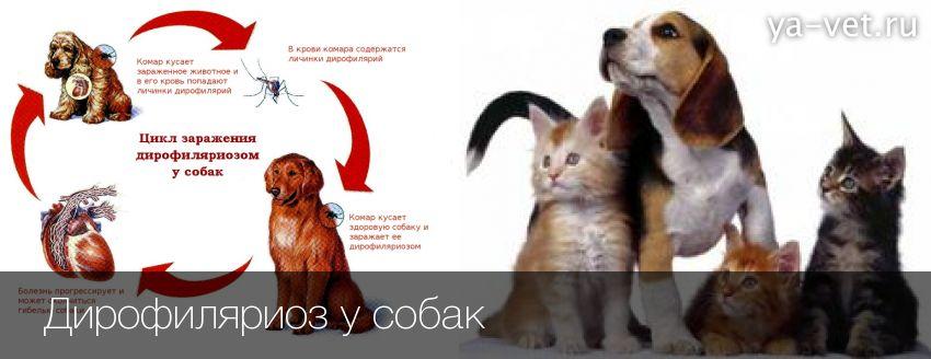 Почему у кошек девять жизней: мифы и действительность - кошовед