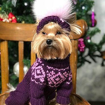 Вязание одежды для собак схема. схемы вязания для маленьких собак. как связать собаке свитер для начинающих спицами. вязание для собак схемы описание, комбинезон, костюм, шапка, спицами, крючком