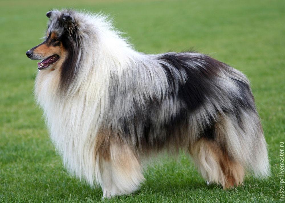 Породы собак с фотографиями и названиями. топ 80 пород собак породы собак с фотографиями и названиями. топ 80 пород собак