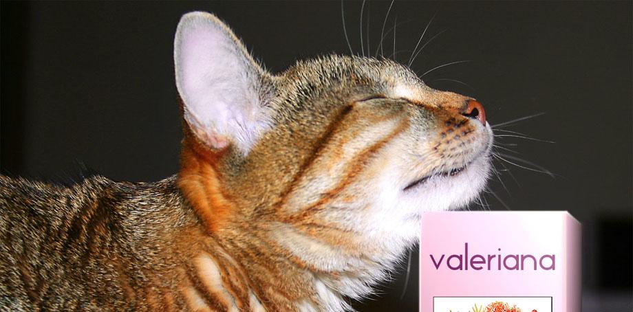 Какие запахи кошки не любят больше всего