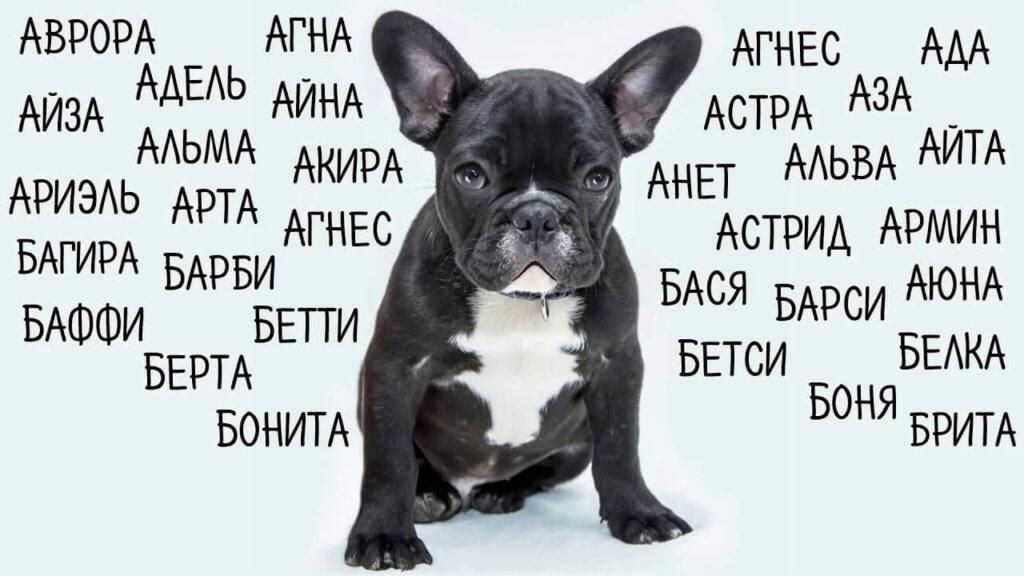 Выбираем кличку для собаки девочки