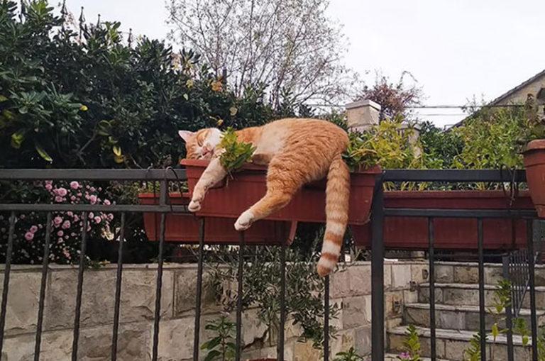 Как место сна кошки по приметам влияет на жизнь хозяина