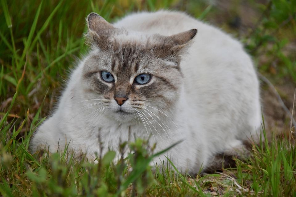 3 причины, почему ваша кошка обожает есть траву