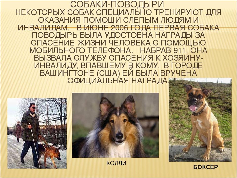Служебные породы собак с фотографиями и названиями