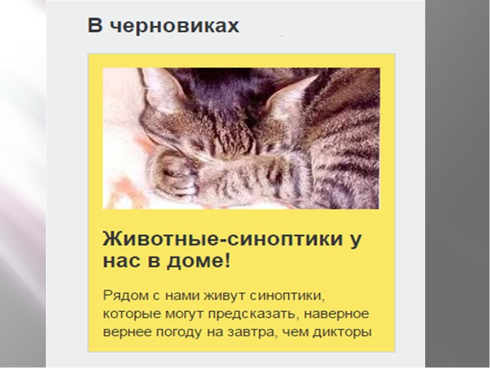 Синоптики в природе. животные – синоптики. прогноз погоды от домашних питомцев животные синоптики