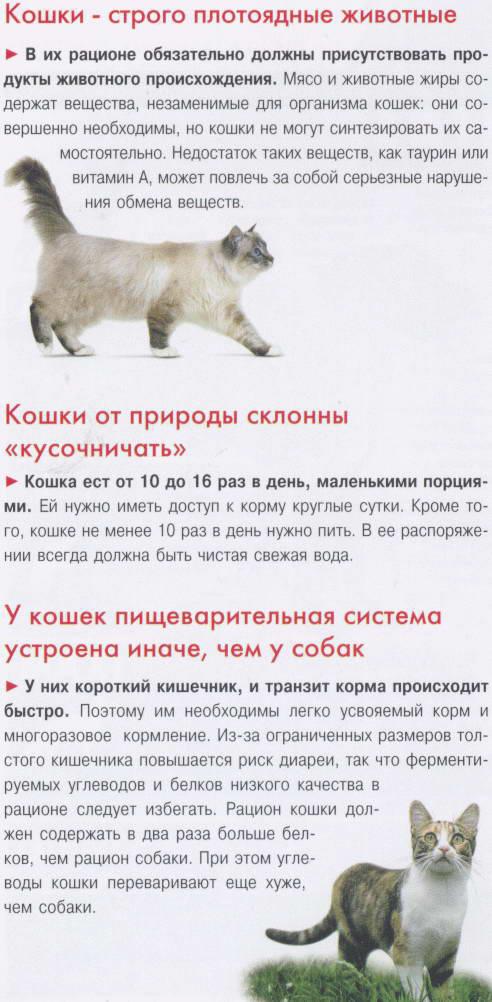 Отказ кошки от еды и воды: насколько опасно состояние