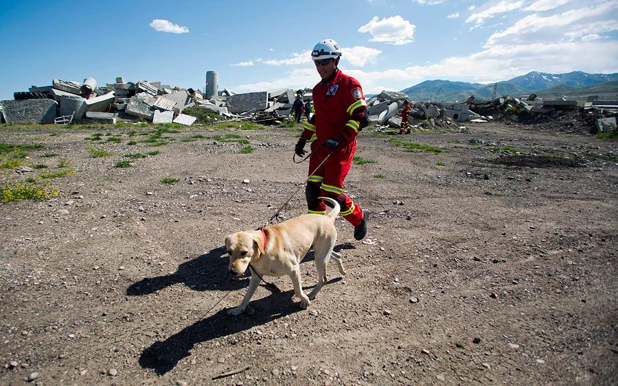 Собака спасатель. история, особенности, породы и дрессировка собак спасателей | живность.ру