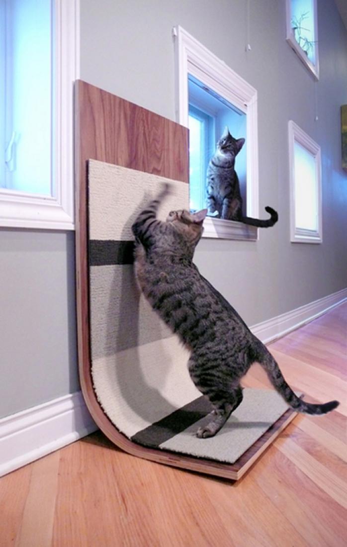Что делать если кошка принесла котенка - что значит