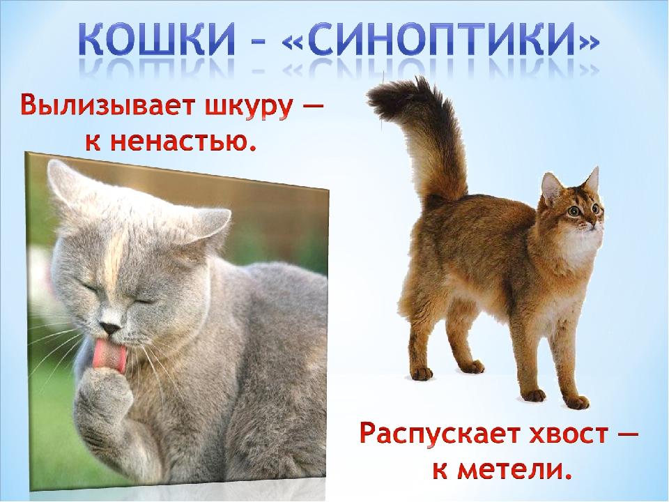 Природные барометры: как животные предсказывают погоду? - зима - info.sibnet.ru