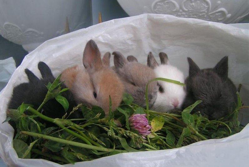 Сколько живут карликовые кролики в домашних условиях: как увеличить продолжительность жизни кролика (видео)
